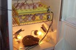 Самодельный инкубатор из холодильника