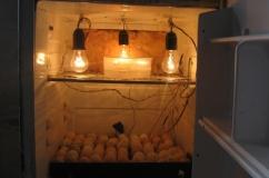 Верхняя часть инкубатора из холодильника