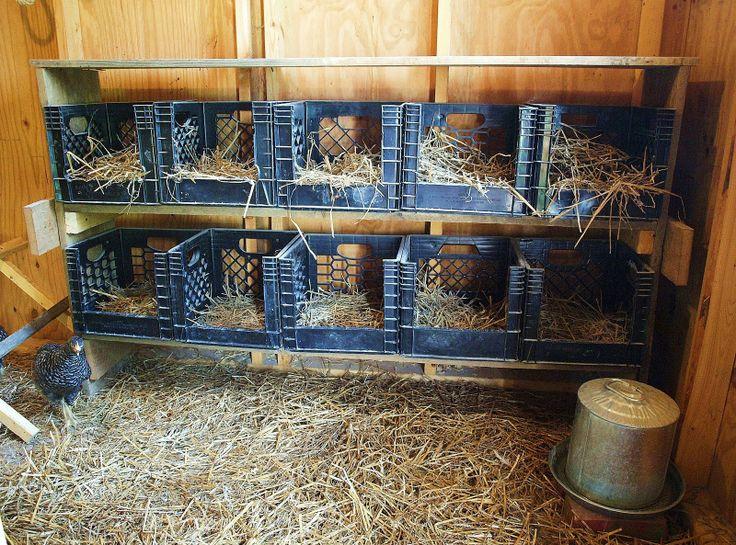 Гнезда в курятнике своими руками фото для 10 кур для зимы 56
