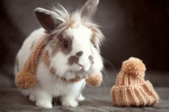 Лвиноголовый кролик в шарфике