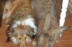 Кролик и пес