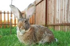 Кролик во дворе