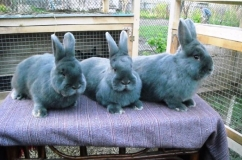 Кролики три