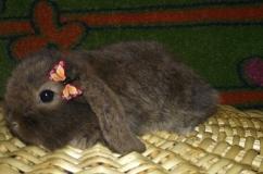 Кролик с заколкой