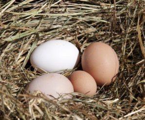 Плохая яйценоскость у кур в разные времена года: причины и способы решения