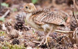 Размножение и выведение птенцов