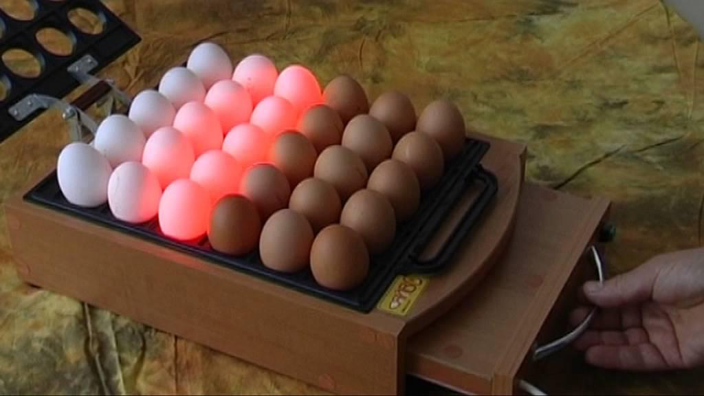 Овоскоп для яиц