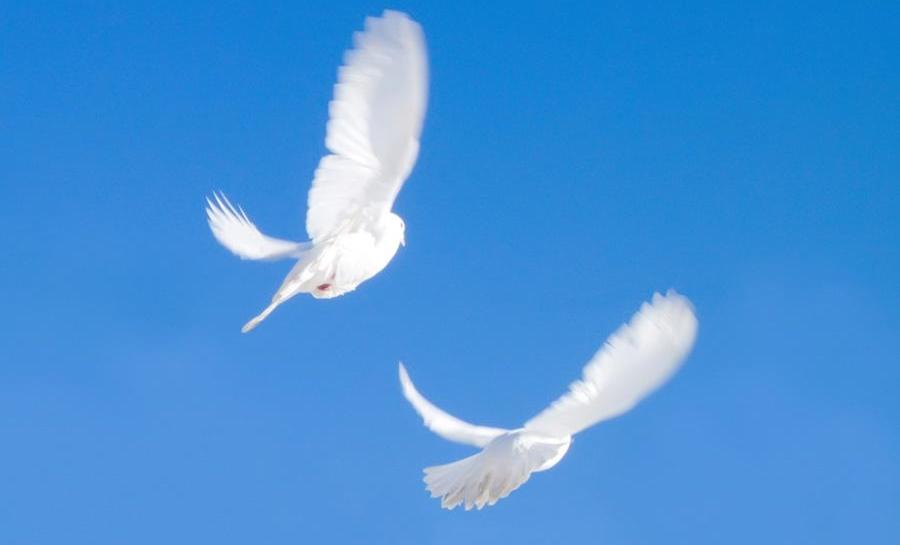 Русские породы голубей