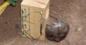 Крысыловка