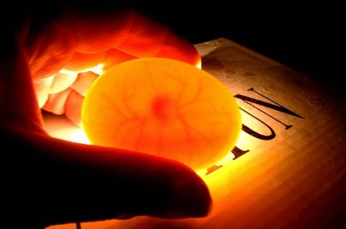 Как проверить оплодотворены ли яйца