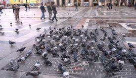 Где живут голуби