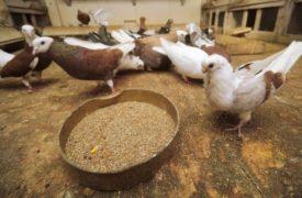 Правильное питание птицы