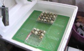Что необходимо сделать перед закладкой яиц