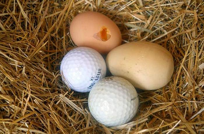 Как решить проблему расклева яиц