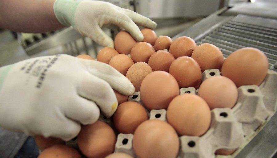 Вес куриного яйца