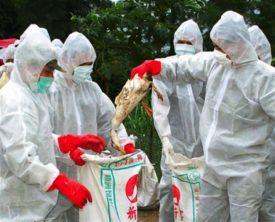 Рекомендации ВОЗ как уберечься от птичьего гриппа
