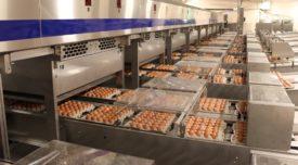 Вес импортных яиц по маркировке