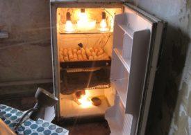 Переоборудование холодильника в инкубатор с автоматическим переворачиванием