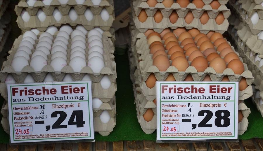 Размеры импортных куриных яиц из Европы