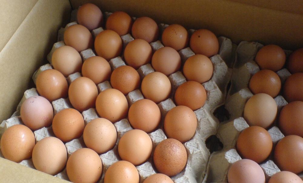 Какие полезные вещества содержатся в курином яйце