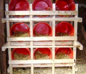 Правила обустройства гнезд в курятнике