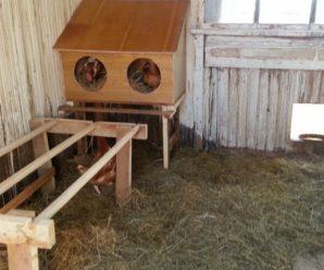 Курятник внутри: как устроить несушек с комфортом, секреты опытных фермеров