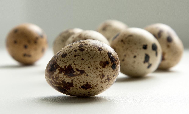 Перепелиные яйца: польза или вред