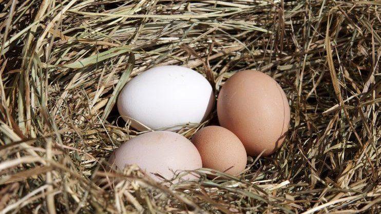 Причины уменьшения размера яиц