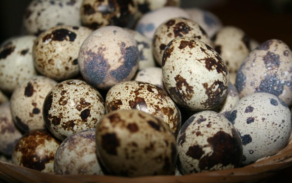 Полезные свойства перепелиных яиц для мужчин