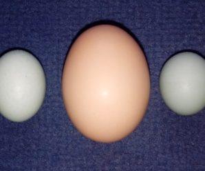 Куры несут мелкие яйца: несколько основных причин этого явления