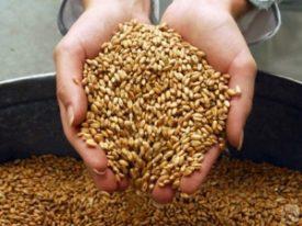 Кормление зерном