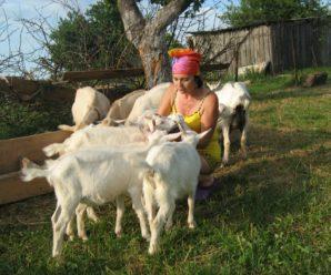 Разведение коз в домашних условиях для начинающих: выбор, уход, кормление