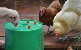 Ниппельная поилка для цыплят