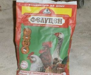 Фелуцен для кур – сбалансированная добавка для улучшения качества куриного мяса и яйца