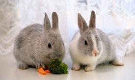 Два крольчонка