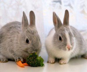 Кормление декоративных кроликов: виды кормов и правильное меню