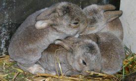 Маленькие крольчата