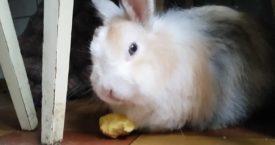 Можно ли кроликам картофель
