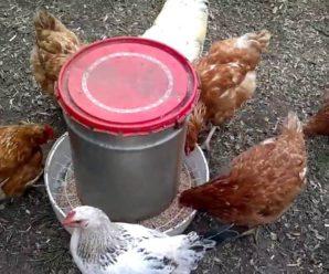 Самодельная кормушка для цыплят: виды, критерии, особенности, техника изготовления