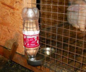 Поилка для кроликов из пластиковой бутылки: инструкция и рекомендации по изготовлению