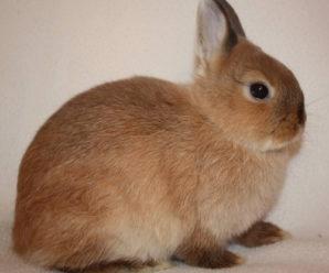 Уход за декоративными кроликами в домашних условиях – все тонкости и секреты