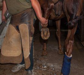 Лошадь подковывают