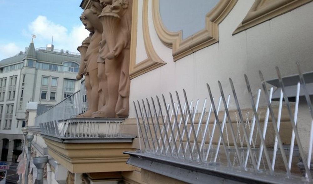 Как избавиться от голубей на балконе и не навредить им?.