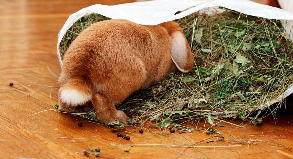 Чем нельзя кормить кроликов