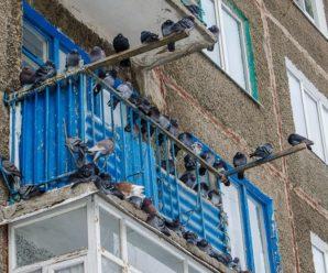 Как избавиться от голубей на балконе: подручные средства и промышленные отпугиватели