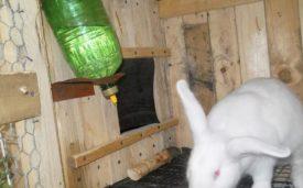 Ниппельная поилка для кролика