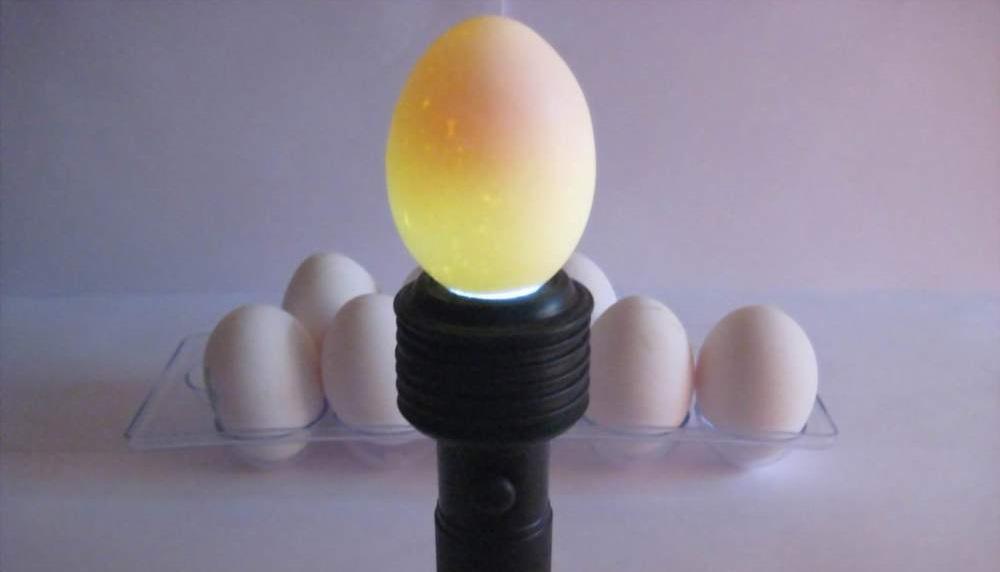 Как часто проводят овоскопирование яиц