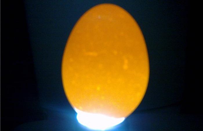 Первое овоскопирование яиц
