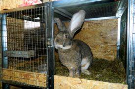 Клетка для кролика великана