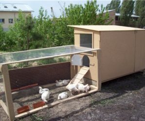 Строим курятник для бройлеров на даче своими руками